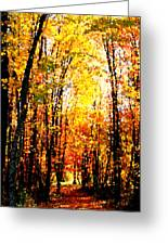 Dappled Sunlight Greeting Card