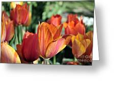 Darby's Tulip 5161 Greeting Card