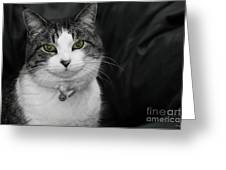 Dare To Look Into My Green Eyes Greeting Card
