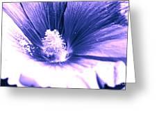 Dark Blue Mallow Greeting Card