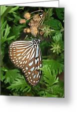 Dark Blue Tiger Butterfly Greeting Card