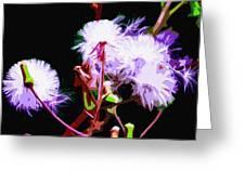 Dark Dandelions Greeting Card