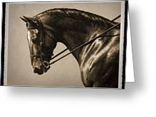 Dark Dressage Horse Old Photo Fx Greeting Card by Crista Forest
