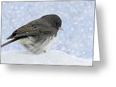 Dark Eyed Junco - Digital Snowflakes Greeting Card