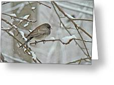 Dark-eyed Junco Or Snowbird - Junco Hyemalis Greeting Card