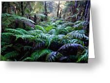 Dark Ferns Greeting Card