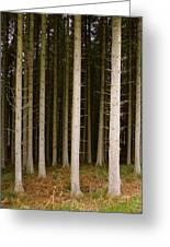 Dark Forest At Kielder Greeting Card