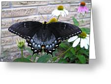 Dark Form Female Tiger Swallowtail Greeting Card