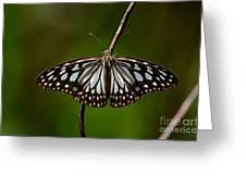 Dark Glassy Tiger Butterfly On Branch Greeting Card