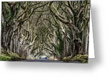 Dark Hedges  Greeting Card