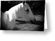 Dark Horse 2 Greeting Card by Chasity Johnson