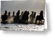 Dark Horses Greeting Card