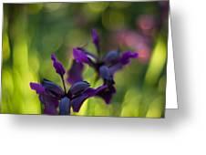 Dark Irises Greeting Card