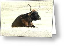 Dark Longhorn Greeting Card