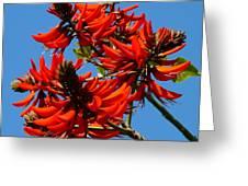 Dark Orange Coral Blossom Greeting Card
