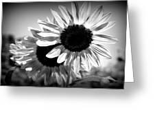 Dark Petals Greeting Card