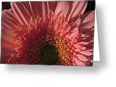Dark Radiance Greeting Card