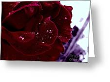 Dark Red Rose Greeting Card