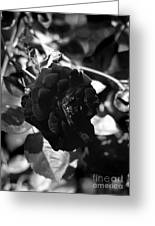 Dark Rose In Black And White Greeting Card