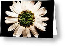 Dark Side Of A Daisy Square Fractal Greeting Card