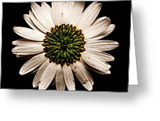 Dark Side Of A Daisy Square Greeting Card