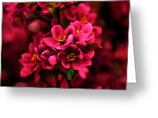 Dark Spring Dreams Greeting Card