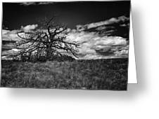 Dark Tree Greeting Card