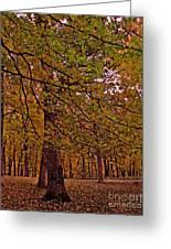 Darker Textured Autumn Trees Greeting Card