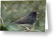 Darkeyed Junco  Greeting Card