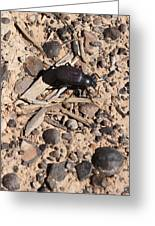 Darkling Beetle And Moqui Marbles Greeting Card