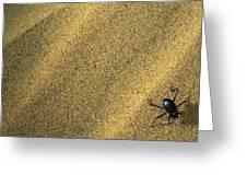 Darkling Beetle Collecting Dew Greeting Card