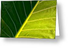 Darkness And Light - Elephant Ear Leaf Details Greeting Card