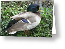 Darling Duck Greeting Card