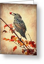 Darling Starling Greeting Card
