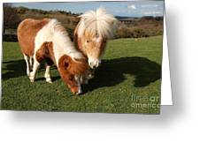 Dartmoor Ponies  Greeting Card