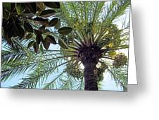 Date Palm And Rubber Tree Branch Greeting Card