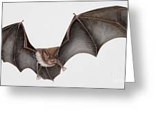 Daubentons Bat Myotis Daubentonii - Murin De Daubenton-murcielago Ribereno-vespertilio Di Daubenton Greeting Card by Urft Valley Art
