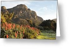 Dawn At Kirstenbosch Greeting Card