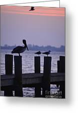 Dawn Brings Hungry Birds Greeting Card