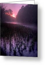 Dawn Mist Greeting Card
