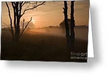 Cannock Chase Dawn Mist Greeting Card