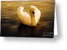 Dawn Swan Greeting Card