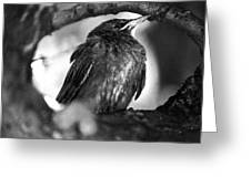 Dax's Bird Greeting Card