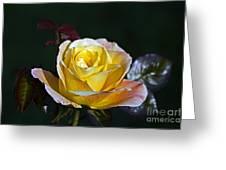 Day Breaker Rose Greeting Card