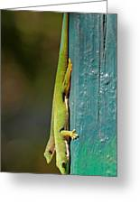 day geckos from Madagascar 1 Greeting Card