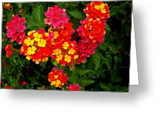 Day Glo Summer Greeting Card