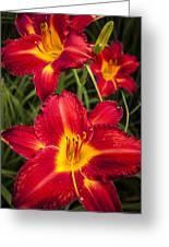 Day Lilies Greeting Card by Adam Romanowicz