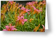 Day Lilies Greeting Card