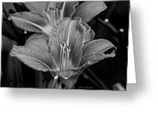 Day Lilies In Black And White Greeting Card