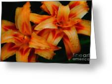 Day Lilies In Soft Focus Greeting Card